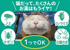 猫だって、たくさんのお薬はもうイヤ!